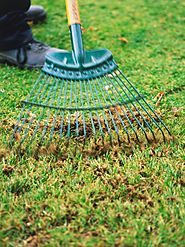 early spring lawn care tips - 609×457