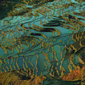 China's Incredible Colored Rice Terraces ...