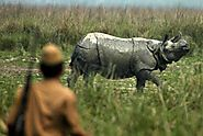 Major Reshuffle of Kaziranga Officials After Reports of Two Rhinos Killed in a Week | Voice Of Greater Assam