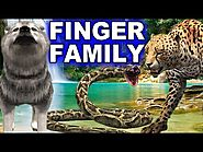 Finger Family Song - Animals Singing Songs for Children - Finger Family Children Songs