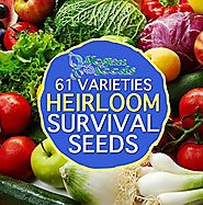 Heirloom Preppers Pack Special Non-gmo Non-hybrid 36,666 Seeds Free Bonus 61 Varieties