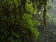 Save the Amazon Rainforest - Information and News About the Amazon Rainforest