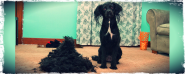 DIY Dog Clipping for a wagging new do long haired pooch!