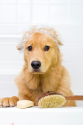 A beginner's guide to dog grooming