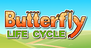 Butterfly Life Cycle - All about butterflies
