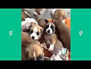 The Best Cats and Dogs Vines ever !