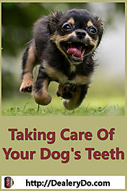 Taking Care Of Your Dog's Teeth