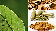 Pharmacology of Kratom Effects - kratomguides.com
