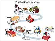 The Food Production Chain - How Food Gets Contaminated