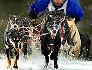 Lakes Region Sled Dog Club
