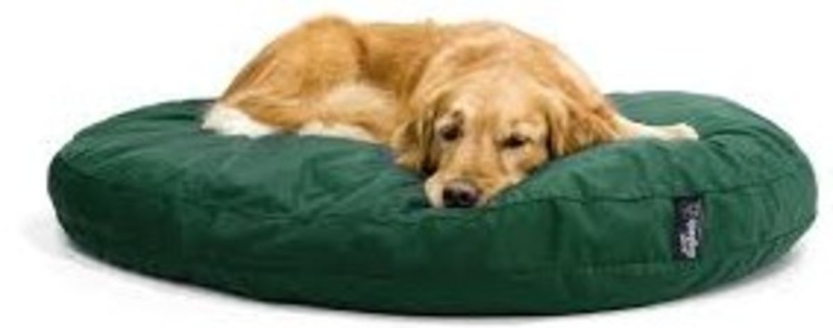 Headline for Top Rated Beds for Dogs
