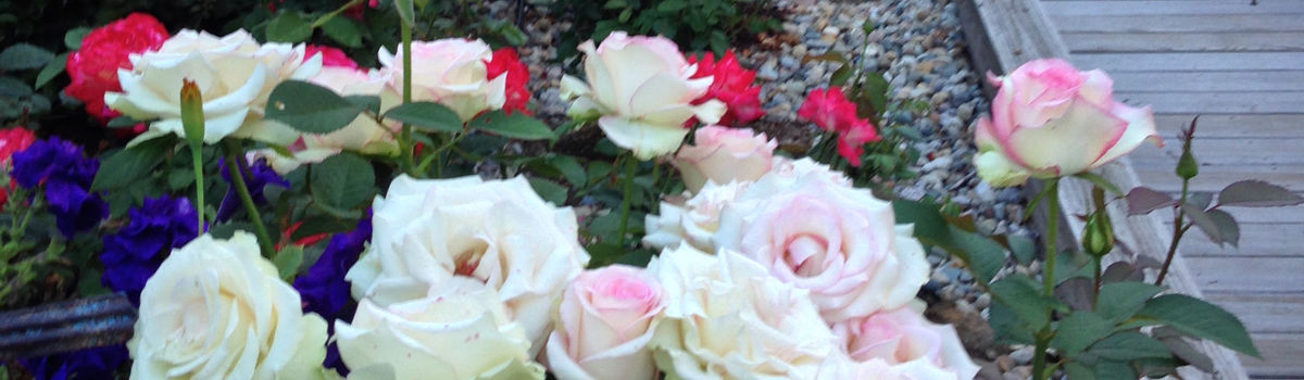 Headline for Best Roses of 2015
