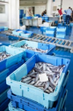 SIMBA Seafood Processing Software