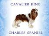Cavaliers not at aggressive with dogs or man.