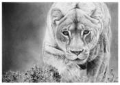 Images of the World - Hyper Realistic Pencil Drawings by Italian Artist Franco Clun.