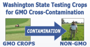 Washington State Testing Crops for GMO Cross-Contamination