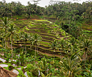Things to do in Ubud Bali | Events in Ubud | Fabulous Ubud