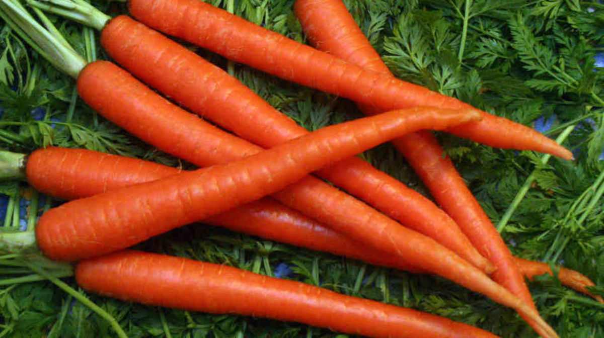 Headline for 10 Amazing health benefits of carrots