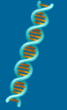 A Science Odyssey: You Try It: DNA Workshop Activity