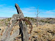 Removing Barbed Wire Clears The Way For Wildlife And Wilderness