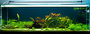 Best Aquarium Starter Kits Reviews (with image) · app127