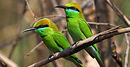 Bird Watching and Environmental Tours