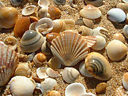 Collect seashells
