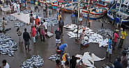 The Fish Markets of Negombo