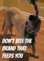 Don't Bite the Brand That Feeds You