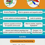What are Antimicrobial Peptides?