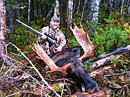 Moose Hunting Tips - Expert Moose Hunting