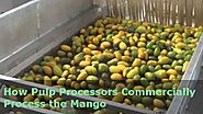 How Pulp Processors Commercially Process the Mango