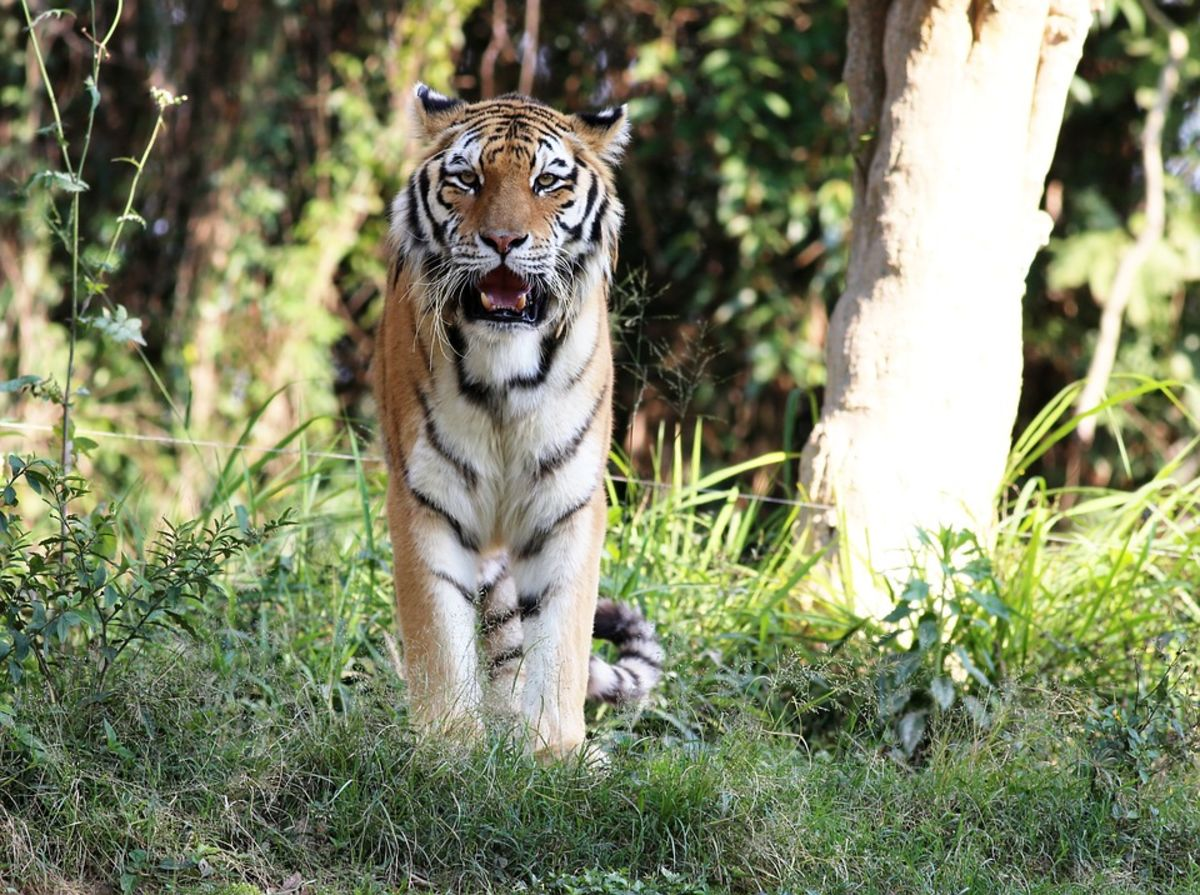 Headline for Best Parks to see Tigers in India