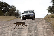 Kgalagadi Transfrontier Park, South Africa