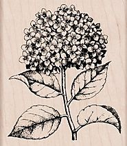 Hero Arts Woodblock Stamp, Hydrangea