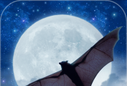 Bats! Furry Fliers of the Night