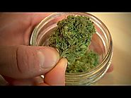 The Scientist - BBC Medical Marijuana Weed ✔ BBC Documentaries 2015