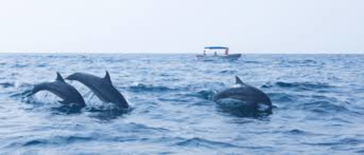 Headline for 7 Types of Whales and Dolphins that can be seen off Sri Lanka