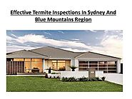 Effective Termite Inspections In Sydney And Blue Mountains Region PowerPoint Presentation - ID:7824163
