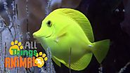 REEF: Animals for children. Kids videos. Kindergarten | Preschool learning
