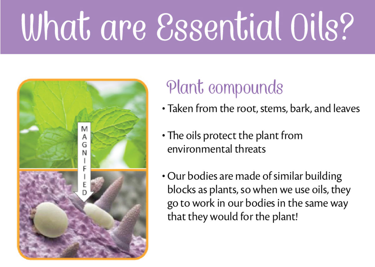 Headline for 8 Essential Oils & Their Uses