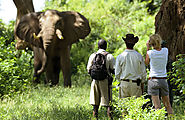eloahtours and safaris,Tours, travels, Gorilla tracking, hotel booking
