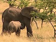 Experience The Wonder Of Nature With Kenya Wildlife Trails Safaris