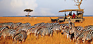 Enjoy Your Holiday's In Africa with Wildlife Kenya Safaris