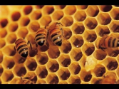 The Neonicotinoid View: Peter Jenkins Discusses EPA Lawsuit