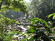 Sinharaja Rainforest Reserve