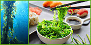 Seaweed Eating Producing Worth Worthy Health Benefits - Healthy Living Benefits
