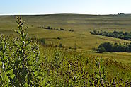 Konza Prairie: It has a 2, 4, or 6 mile loop for beginning to advanced hikers.