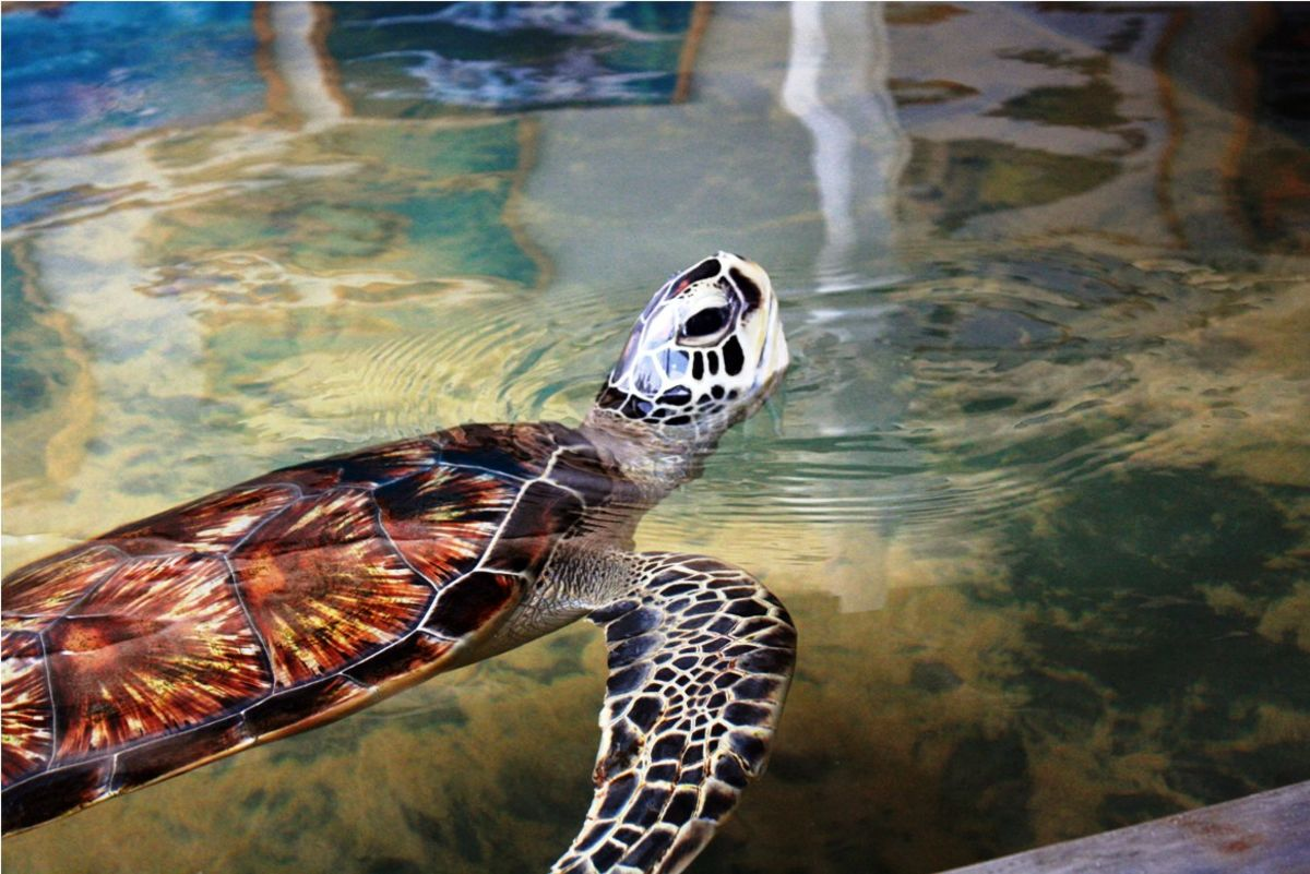 Headline for Turtle Conservation Projects in Sri Lanka – Marine Conservation in Action
