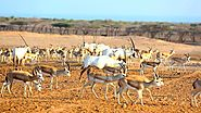 Discover the Beauty of Sir Bani Yas Island
